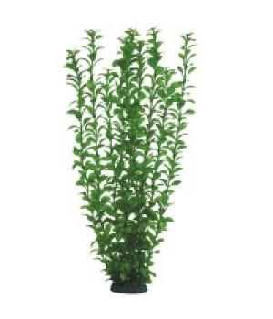 Растение пластиковое Людвигия зелёная, 50 см