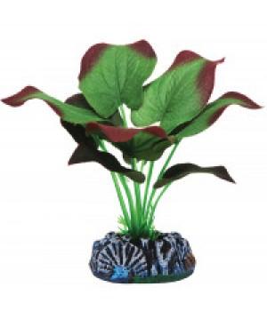 Растение шелковое Эхинодорус, 20 см