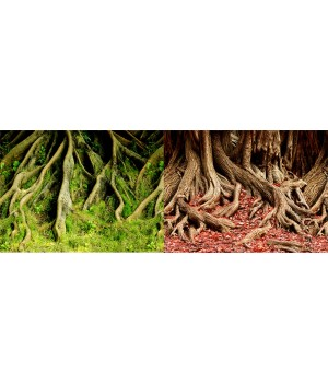 Фон для аквариума двухсторонний Корни с мохом/Корни с листьями 60x150см 8009/8010
